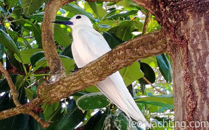 Ptactwo Seszele