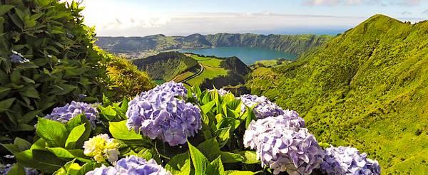 Czarter jachtów wyspy Azory - niebieskie hortensje
