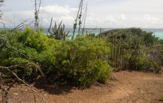 Czarter nas Karaibach - Wnętrze wysepki Baradal na Tobago Cays
