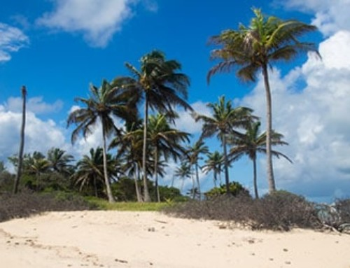 Karaibski rejs po Grenadynach – żeglarskie emocje i chillout
