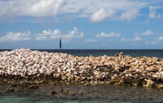 Czarter na Karaibach - Mustique