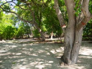 Mistique - wnętrze wyspy to dzika przyroda
